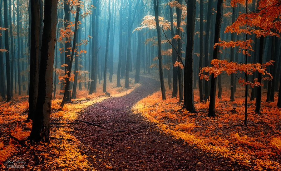 Awesome Forest Photography Ideas Feture